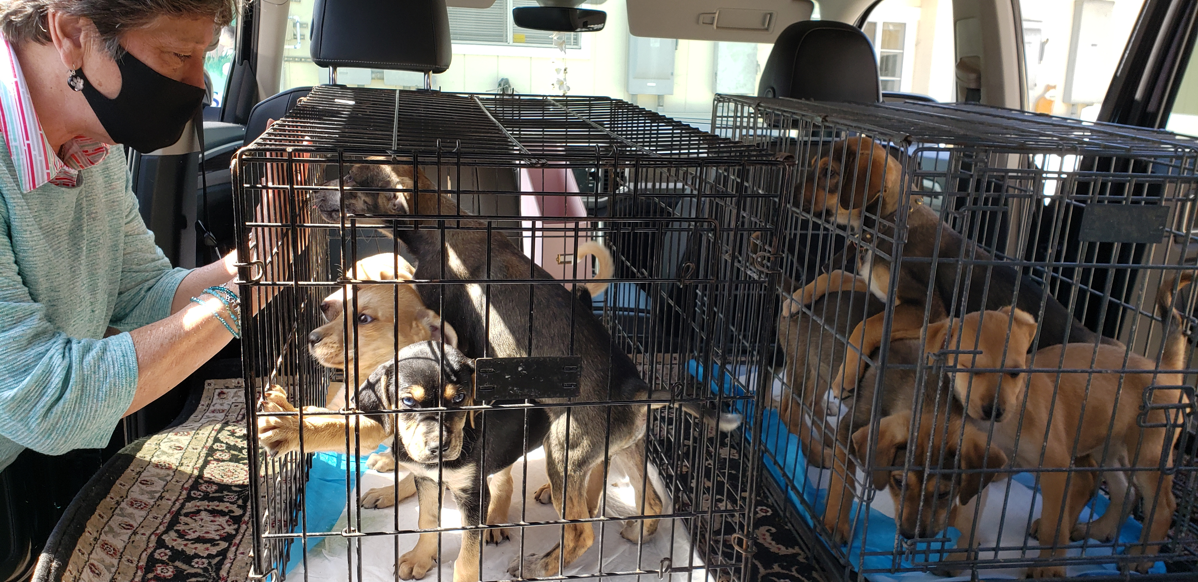 19 Mexican dogs arrive in Encinitas, will soon be available for adoption