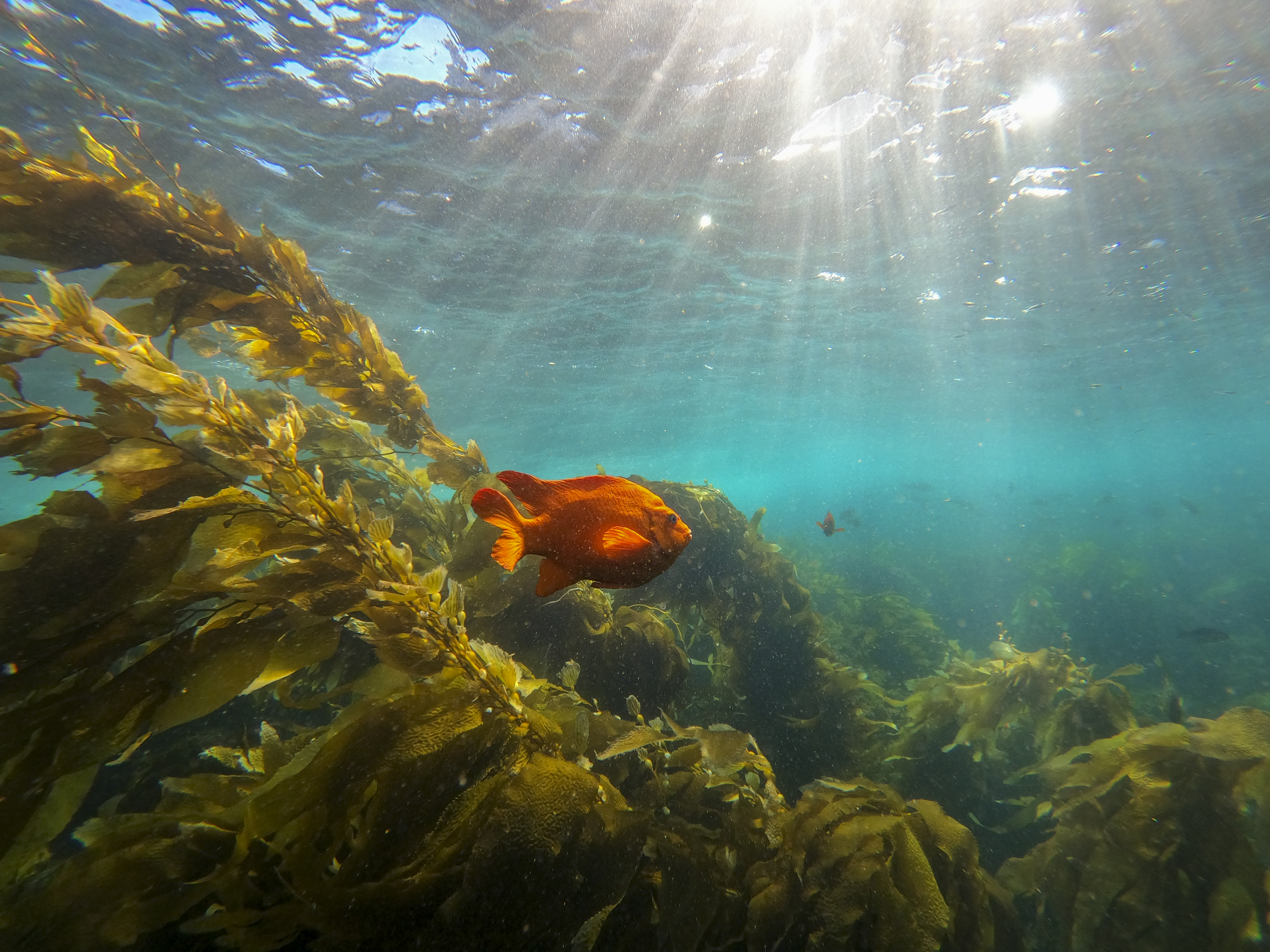 After decades of abuse, oceans could offer a climate change solution